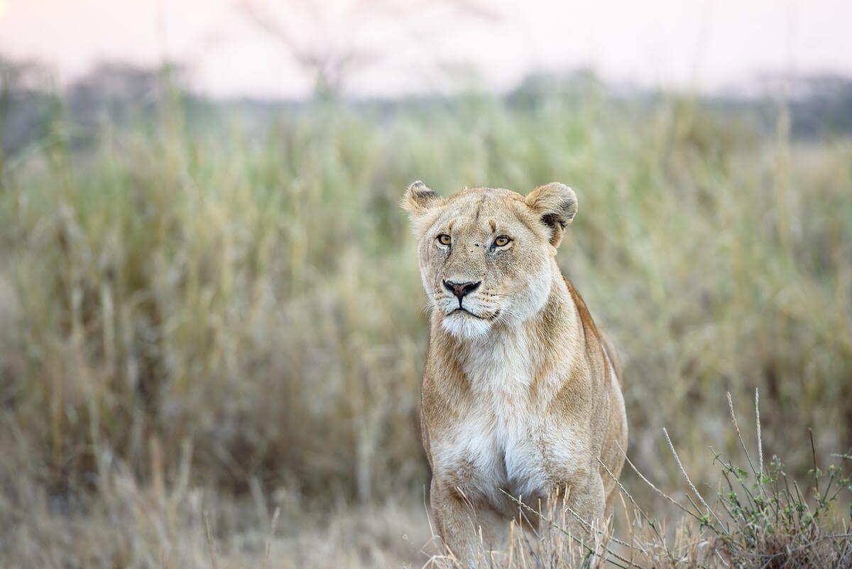 chen hu 526051 unsplash 1 - Tansania & Sansibar – Höhepunkte