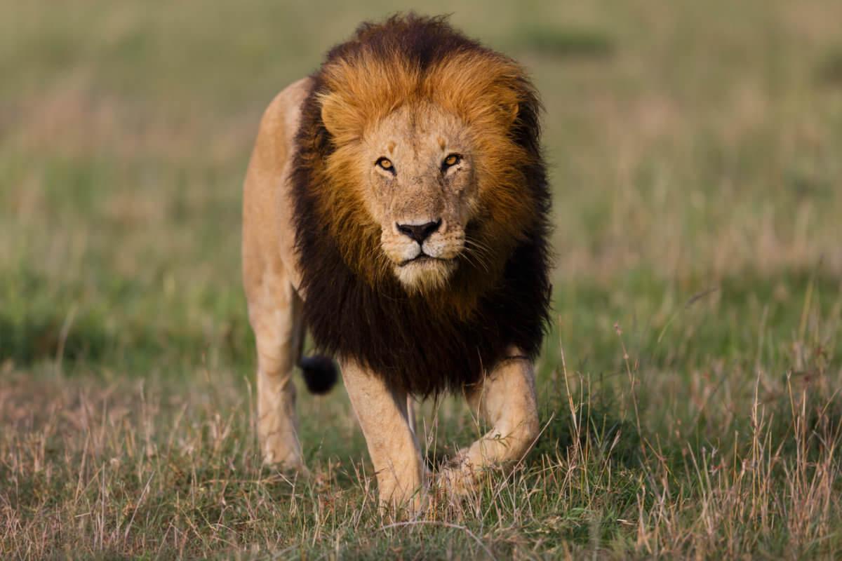 shutterstock 315238403 - Tierparadies trifft Traumstrand im Süden Tansanias