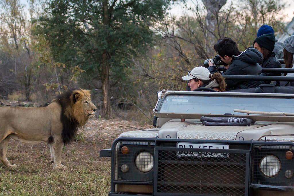 CS and lion Claudia Schnell - Bush Lover Safari