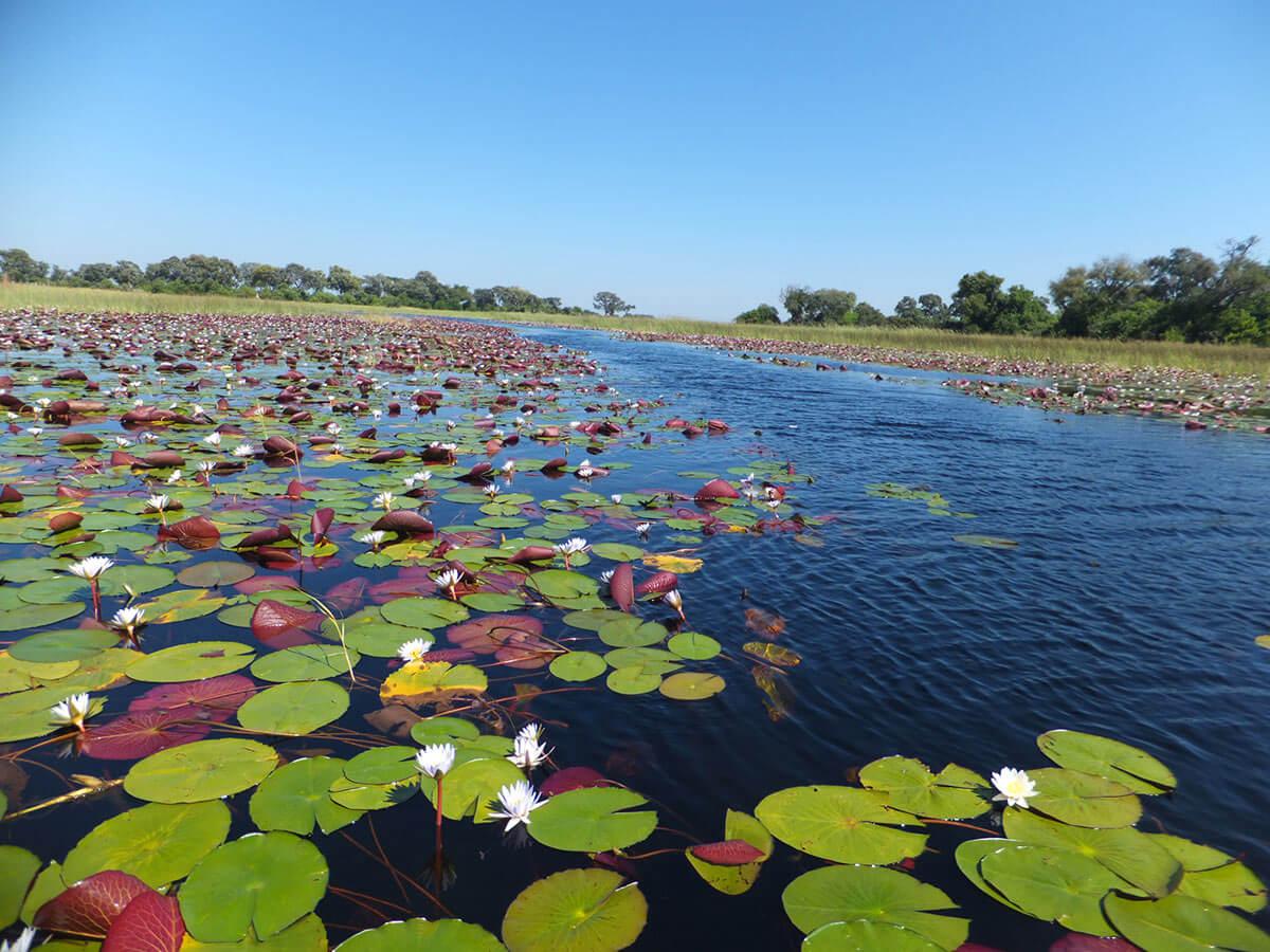 DSCF4984 Lisa Heintzkill - Okavango Delta Spezial
