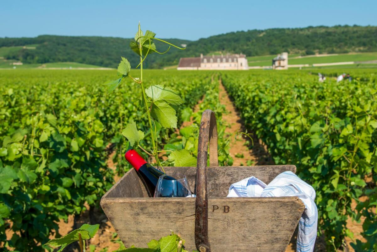 ADO 3498 - Das Burgund – Frankreichs Genussregion Nr. 1