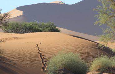 IMG_2436 Rainer Fischer, Namibia